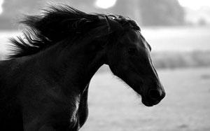 runblackhorse.jpg