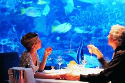 pesci-che-guardano-umani-in-cattivita.jpg